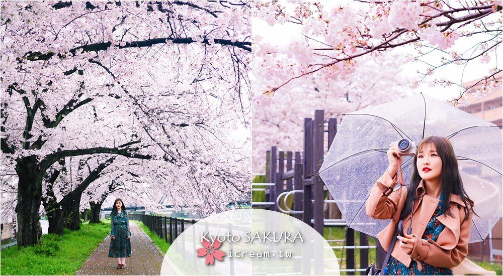 【京都】京都車站旁鴨川 無人秘境 2017賞櫻景點推薦  4/8滿開
